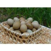 野鸡蛋,野鸡蛋礼盒,野鸡蛋批发