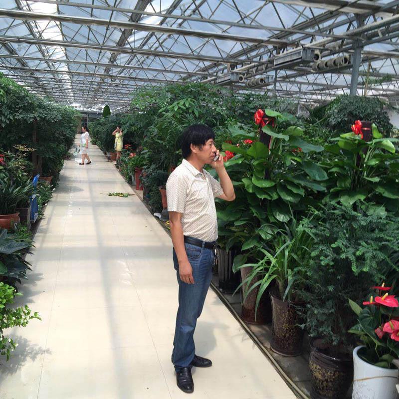 河南花卉市场