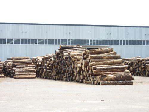 唐山新佳 建筑木材加工厂 建筑木方哪家好