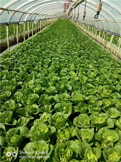 绿宝有机肥示范案例-