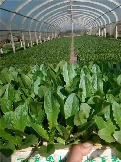 云南有机肥厂家