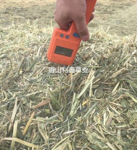 优质燕麦草
