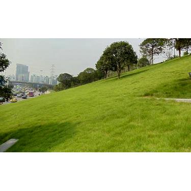 红星草业|河北草坪价格|绿化草坪厂家