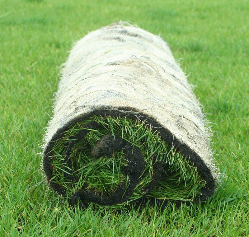 红星草业|河北草坪厂家|河北绿化草坪采购