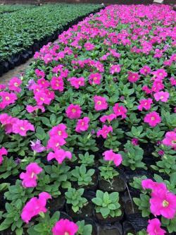 唐山绿化花卉