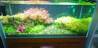 水草造景缸