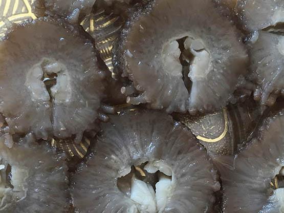 海参现在流行喝着吃