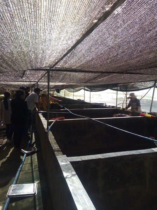 嵩明马黄粉虫石蛙养殖基地