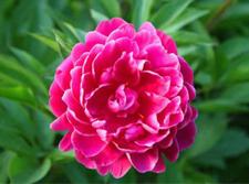 日常花卉常见的病虫害知识