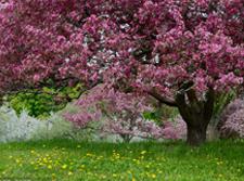 草花花卉在园林中的应用