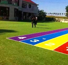 幼儿园专用草