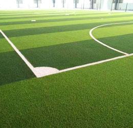 球场体育用草