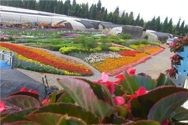 花仙子溫馨提示-怎樣營造花園