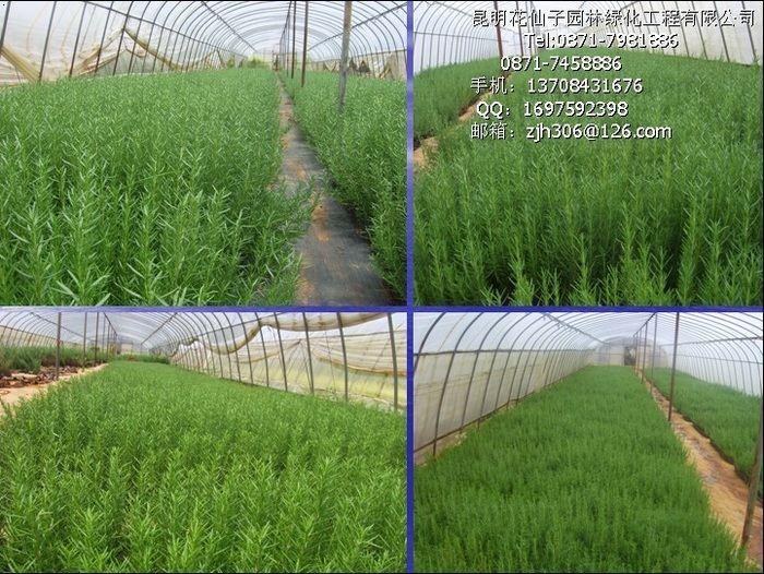花仙子溫馨提示-新綠化技術可節水85%