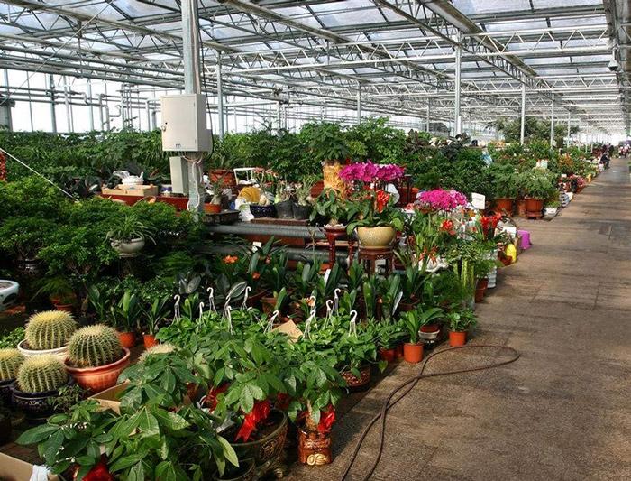 花卉市场温室案例