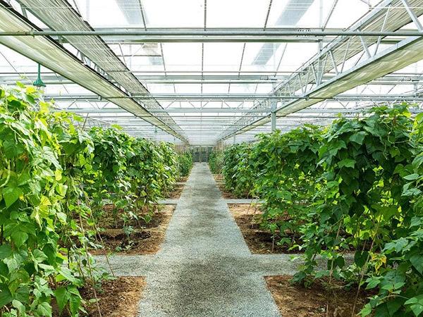 蔬菜大棚温室案例