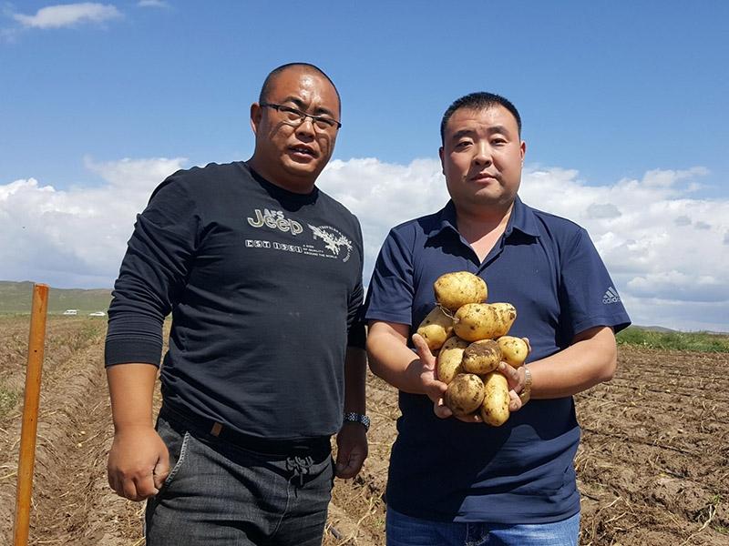 李新鹏在内蒙古太仆寺旗土豆种植示范基地