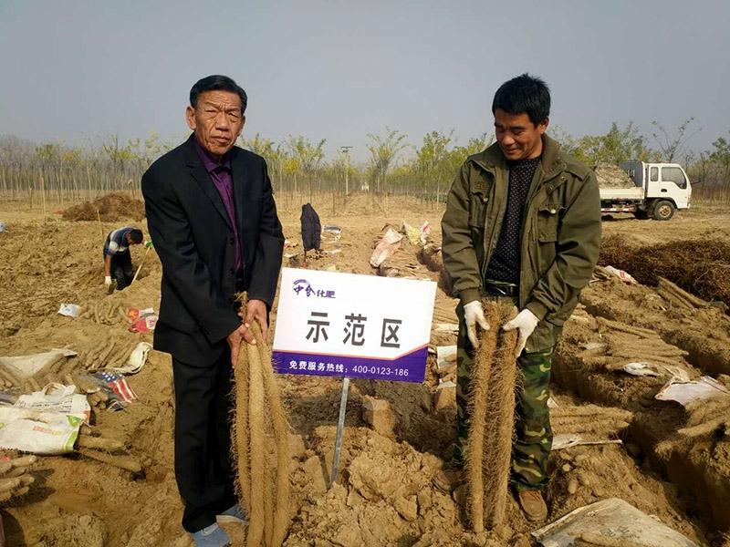 刘书恩在河北高阳山药种植示范基地