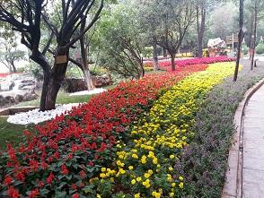 云南園林綠化